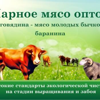 Парное мясо оптом